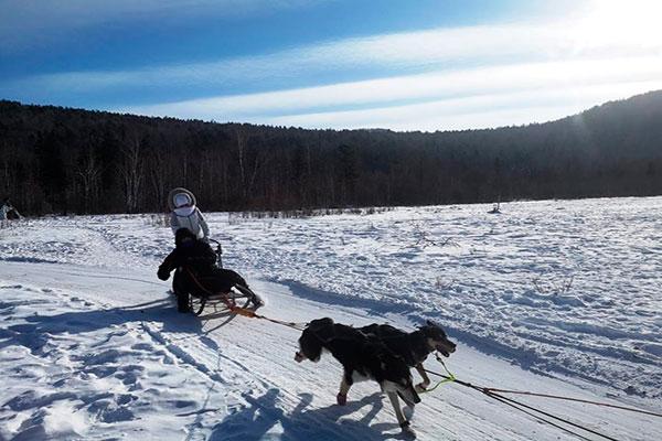 Байкал и собаки